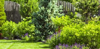 Garden inspiraton
