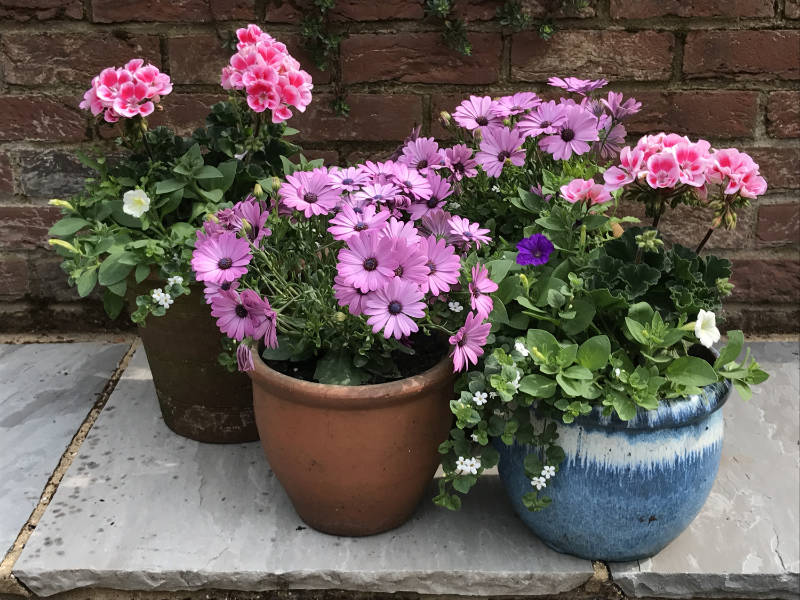 Garden makeover use potted plants