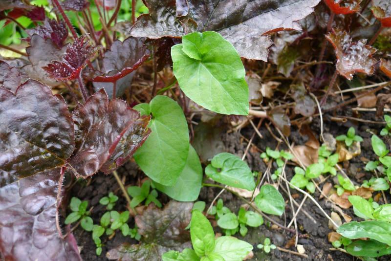 Remove affected plants (Hannah Stephenson/PA)
