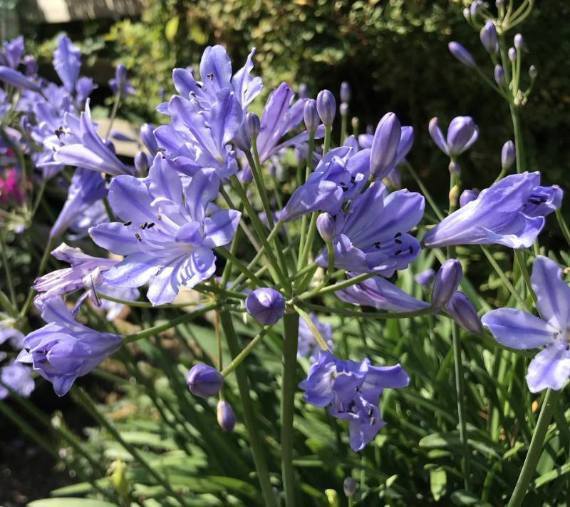 Get rid of slugs by choosing resistant flowers