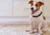 How to keep pets happy healthy FAQ guide