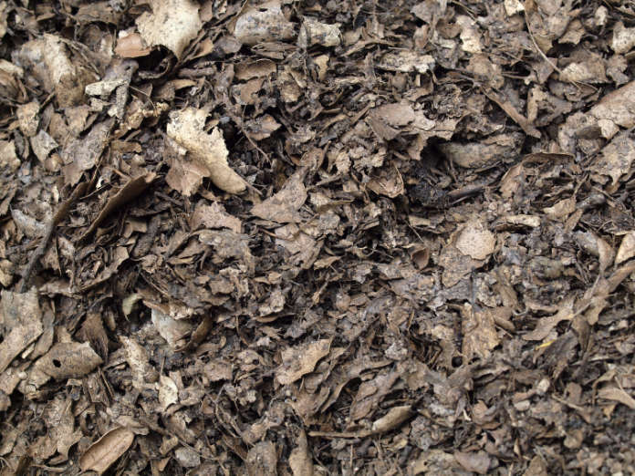 Create shade in garden Allow roots space and then mulch the area