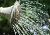 How to conserve water in the garden guide