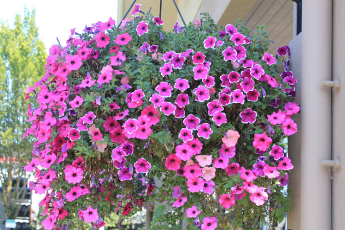 How to make a hanging basket - step 6