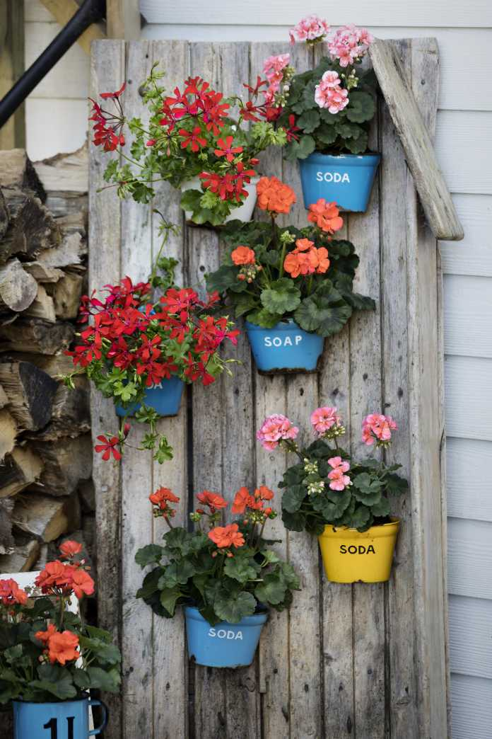 Try vertical planting with pelargoniums