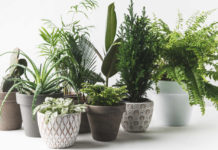 Plant therapy various beautiful green plants in pots on white