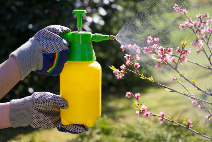 Vegan gardening Don't kill pests with insecticides