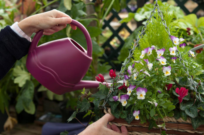 Water plants more slowly (Tim Sandall/RHS/PA)