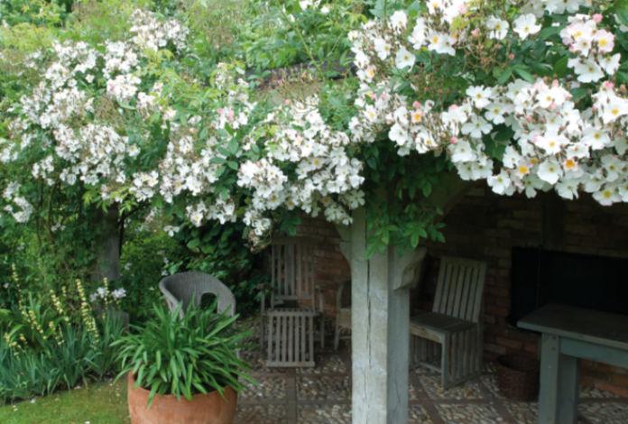 Roses can cast shade under pergolas