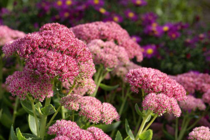 Best plants for pots include Sedum