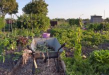 Feed your fruit and veg to increase your crop yield