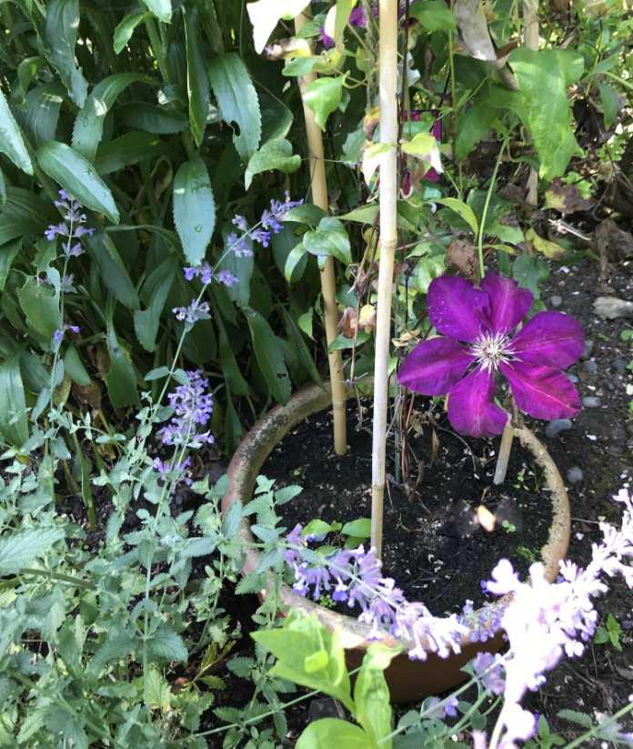 Hidden pot in garden border