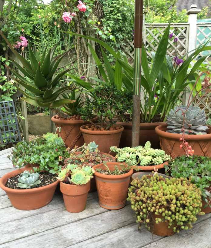 Houseplants need shade outside