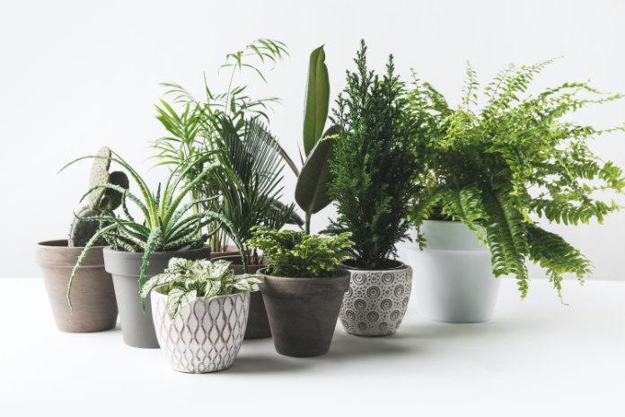 Move houseplants outside