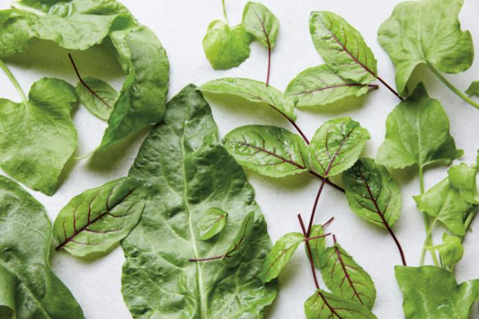 How to grow herbs - Sorrel (Tamin Jones/Nourish/PA)