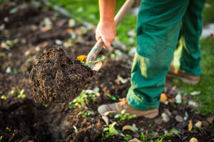 How to grow pumpkins - step 2 - sowing seeds
