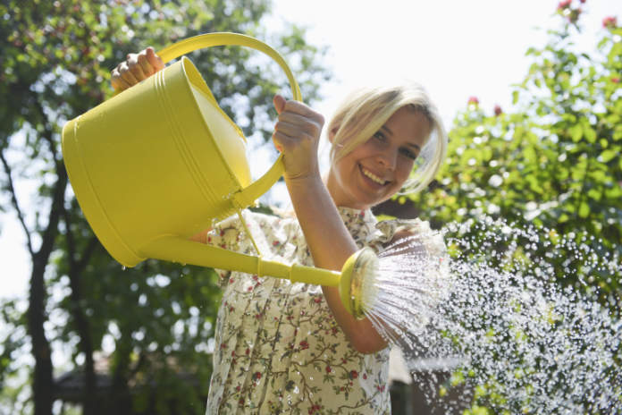 How to grow pumpkins - step 4 - watering