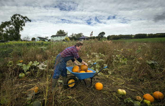 How to grow pumpkins - step 6 - timing