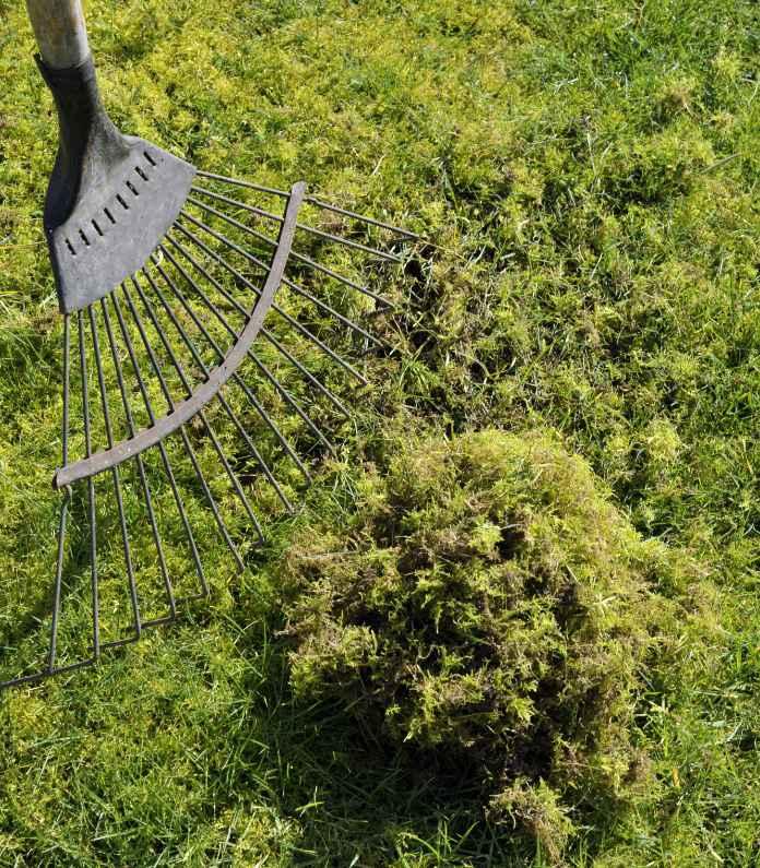 Get rid of moss (Thinkstock/PA)