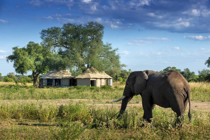 An elephant strolls towards the Nyamatusi Mahogany camp