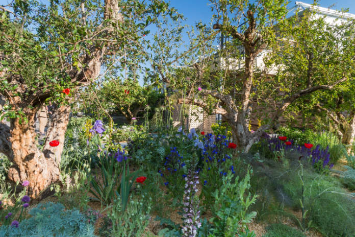 Designer Tom Massey used pomegranate trees in his show garden at RHS Chelsea Flower Show (Neil Hepworth/RHS/ PA)
