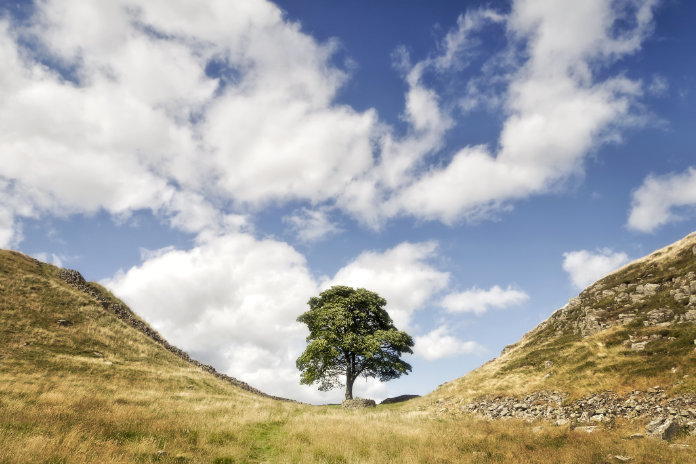 BEauty spots One of the most famous points on Hadrian's Wall is Sycamore Gap