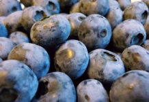 Blueberries (Nick Ansell/PA)