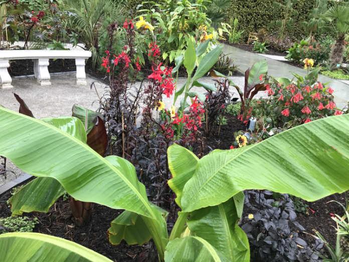 RHS Wisley's Exotic Garden. (Hannah Stephenson/PA)