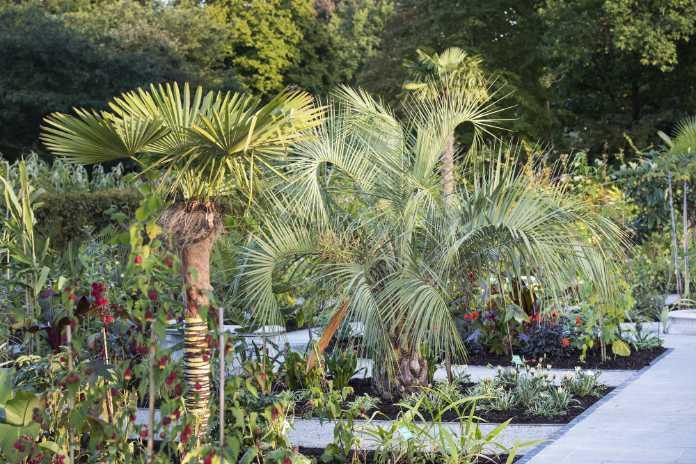 Palms like a hot spot (Joanna Kossak/RHS/PA)