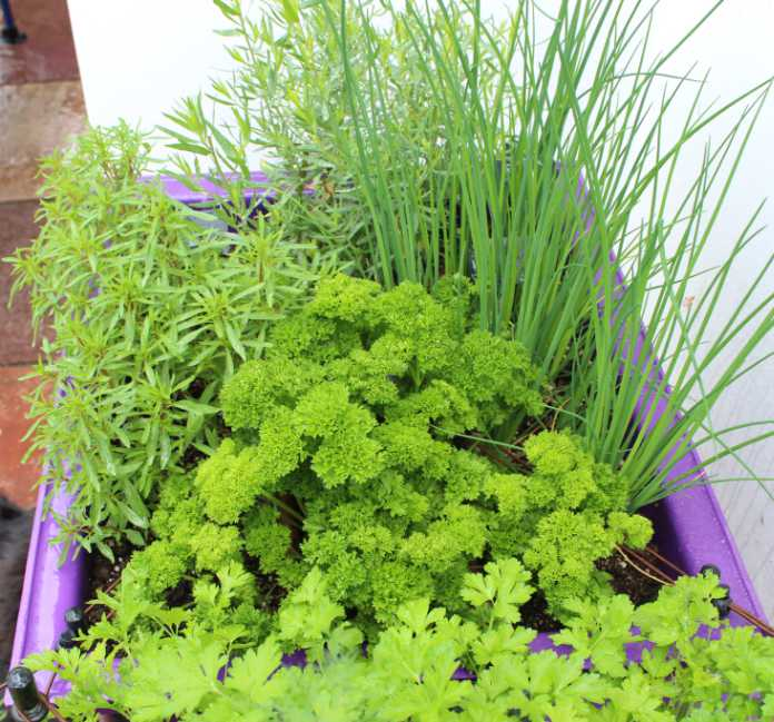 Herbs can thrive in containers on a balcony