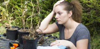 Don't return home to dried-up plants (Thinkstock/PA)