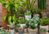 Health benefits of housplants