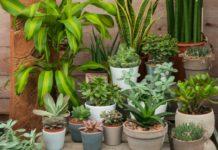 Health benefits of housplants
