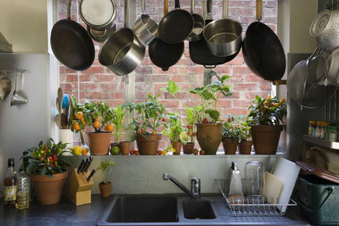 Houseplatns in kitchen