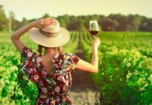 Back view of woman in vineyard drinking glass of red wine at sunset