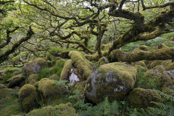 Wistman's Wood, Hampshire, England