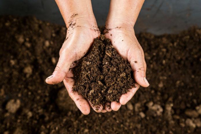 Cut flowers soil