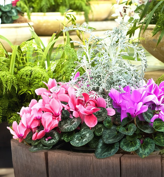 Autumn flowers for containers