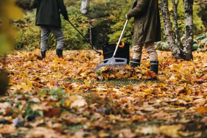 Leaf rakes make light work of autumn clear-ups