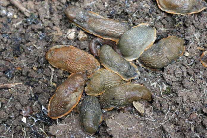 Protect plants against slugs