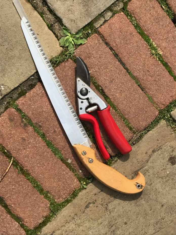 Saws and secateurs are essential in autumn