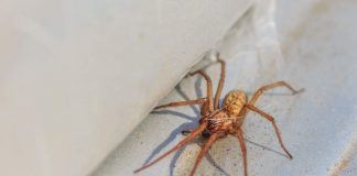 How to stop spiders coming into your home