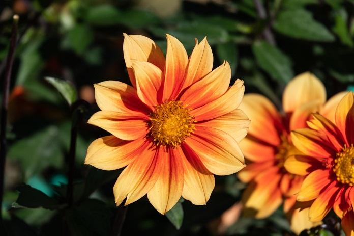 autumn garden idea