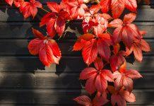 autumn garden ideas