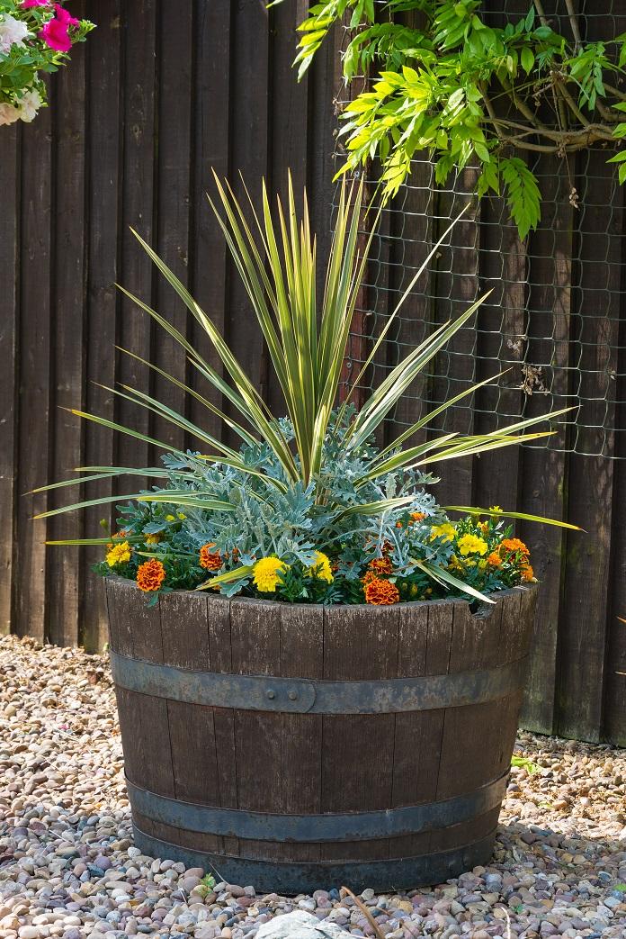Winter exotic plants