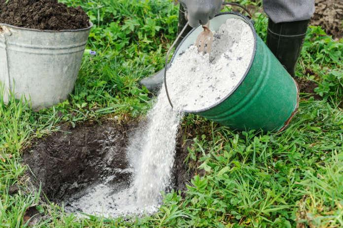 Soil enricher wood ash