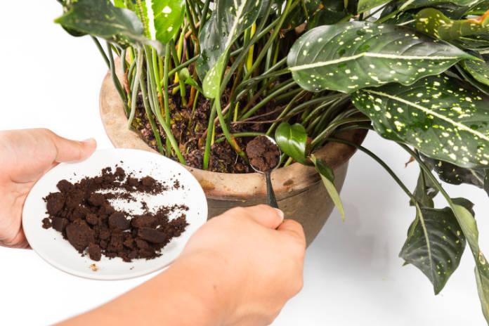 Soil enrichers coffee grounds