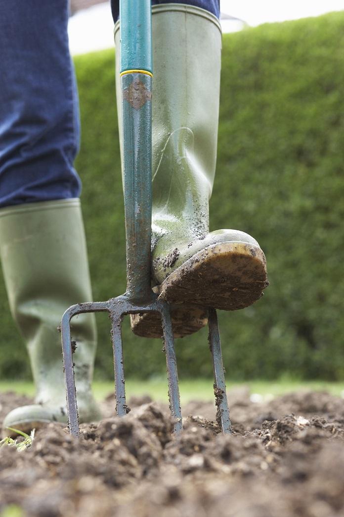 how to store dahlia tubers