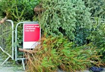 Christmas tree recycling guide