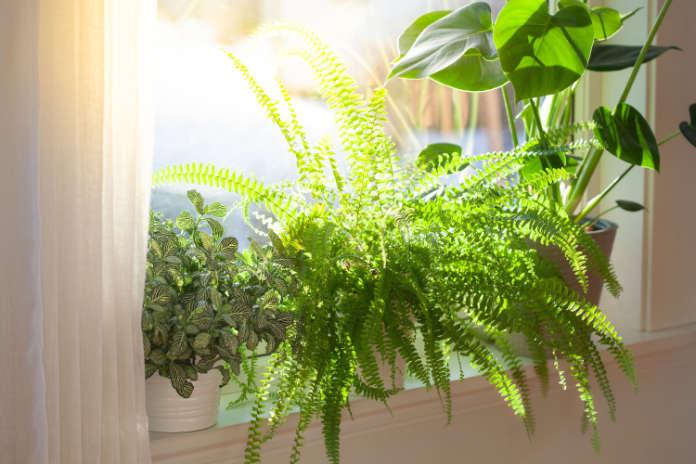Give houseplants light in winter